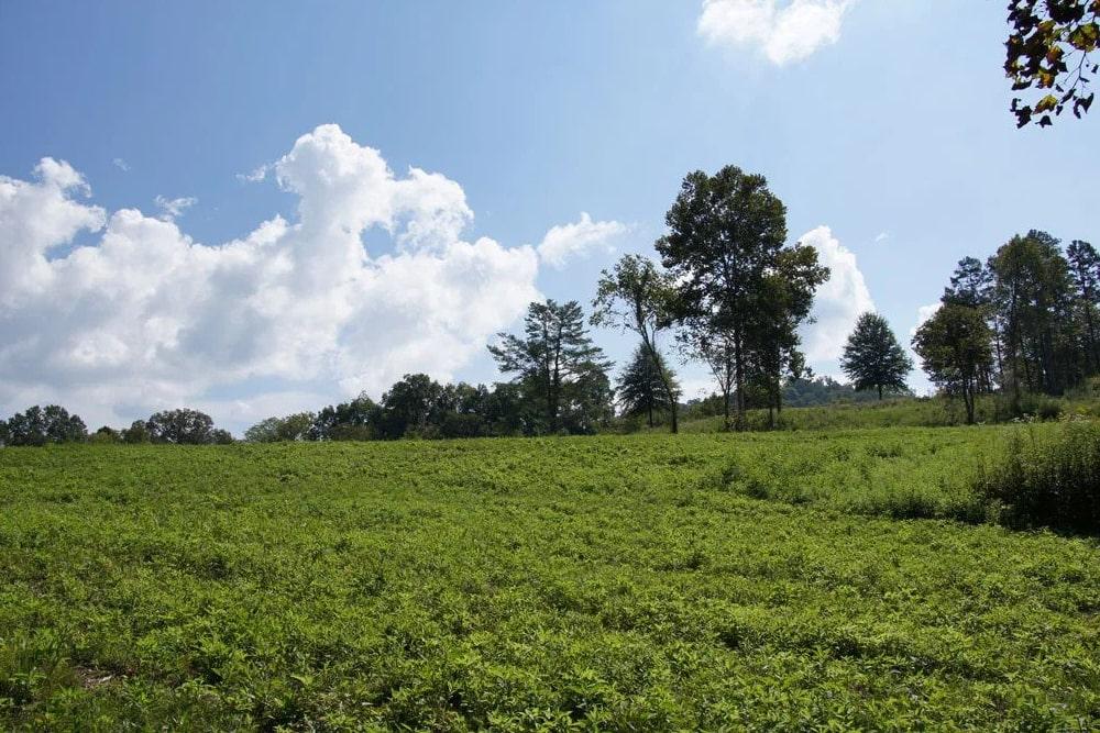 Homes & Homesites For Sale in Oak Ridge, TN